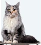 http://palladium-pets.com/img/cat-1.png
