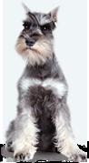 http://palladium-pets.com/img/dog-1.png